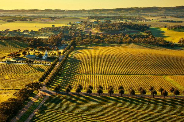 Barossa Valley investment wine